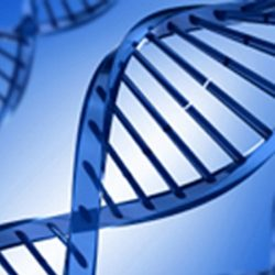 DNA Testing Services