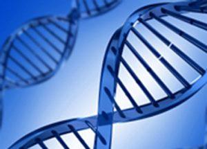 DNA_Model_600